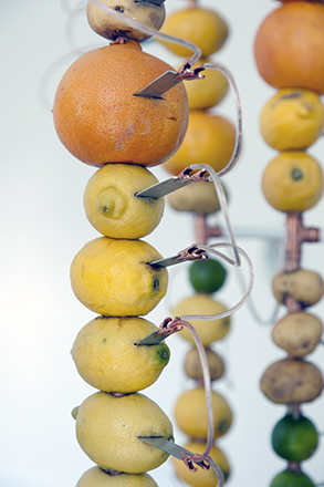 _fruit battery detail